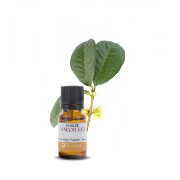 Osmanthus Absolute - pure
